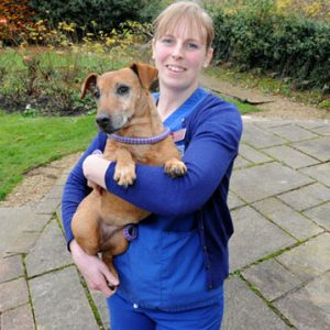 Small Dog Being Held by Veterinary Nurse
